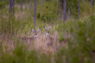 20171231 - Apalachicola National Forest - 102884.jpg